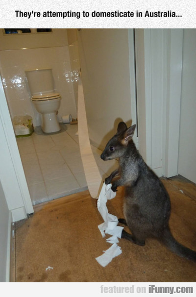 They're Attempting To Domesticate In Australia...