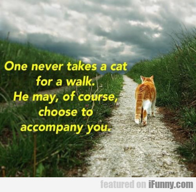 One Never Takes A Cat For A Walk...