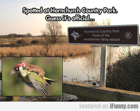 Spotted On Hornchurch Country Park...