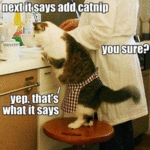 Next It Says Add Catnip.j