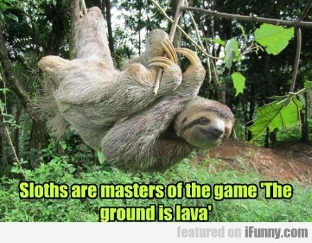 Sloths Are Masters Of The Game The Ground