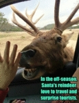 In The Off Season, Santa's Reindeer