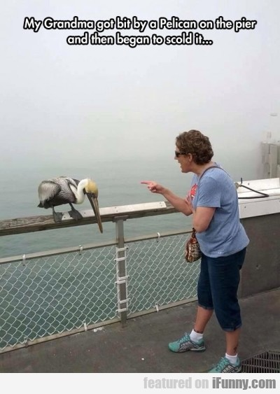 My Grandma Got Bit By A Pelican On The Pier.