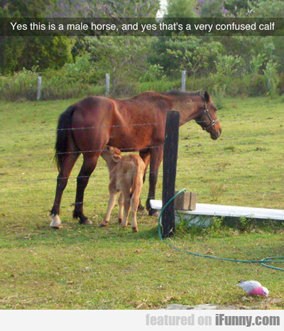 Yes, This Is A Male Horse...