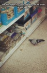Saw This Pigeon In A Shop...
