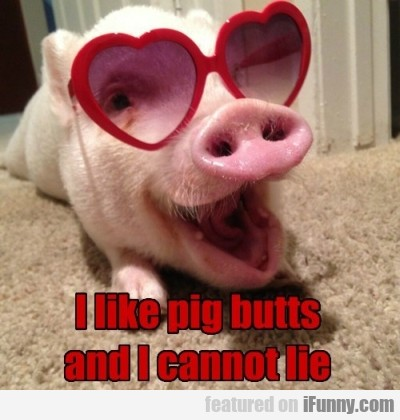 I Like Pig Butts And I Cannt Lie