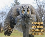 I Thought You Knew I'm Allergic To...
