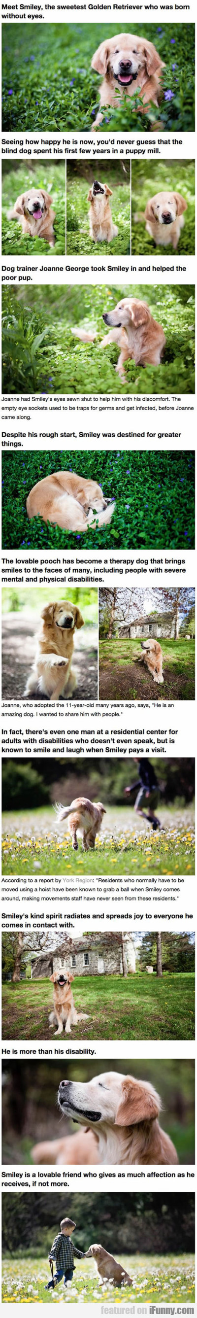 Meet Smiley The Sweetest Golden Retriever...