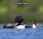 I'm A Loon - Hooray!