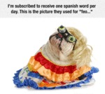 I'm Subscribed To Receive One Spanish Word Per Day