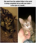 She Went From The Saddest Kitten In The World To..