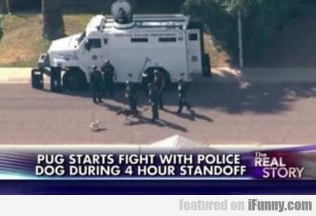 Pug Starts Fight With Police Dog...