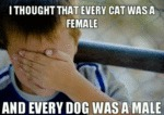 I Thought That Every Cat Was A Female...