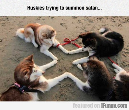 Huskies Tryin To Summon