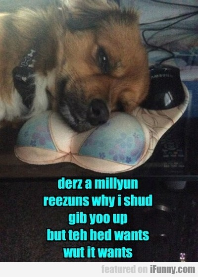 Derz A Millyun Reezuns Why I Should.
