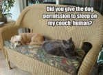 Did You Give The Dog Permission