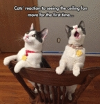 Cats Reaction To Seeing The Ceiling