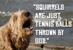 Squirrels Are Just Tennis Balls