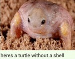 Here's A Turtle Without A Shell...
