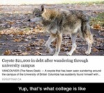 Coyote $21,000 In Debt...
