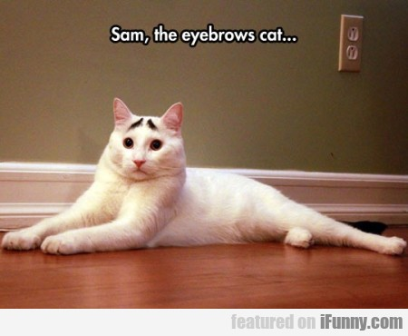 Sam The Eyebrows Cat