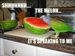 Shhhh The Melon Its Speaking To Me