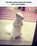 This Albino Squirrel Comes To The Window Just..