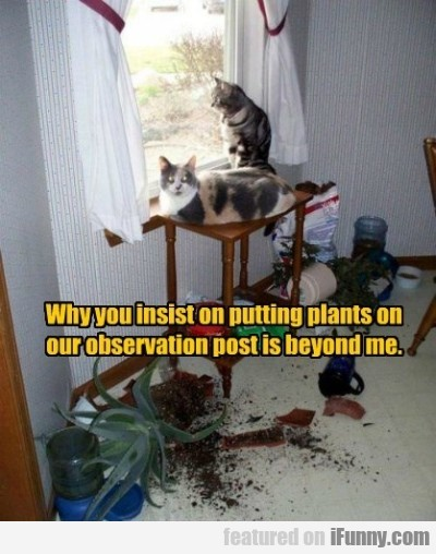 why you insist on putting plants on our...