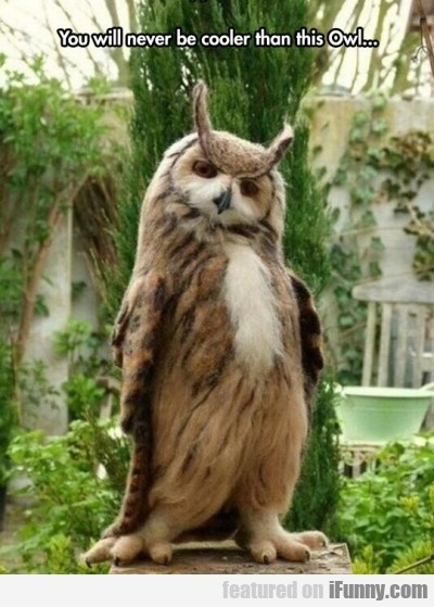 You Will Never Be Cooler Than This Owl