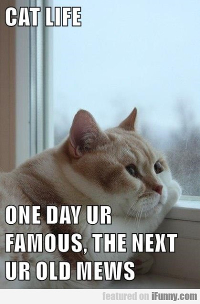 Cat Life - One Day Ur Famous The Next...