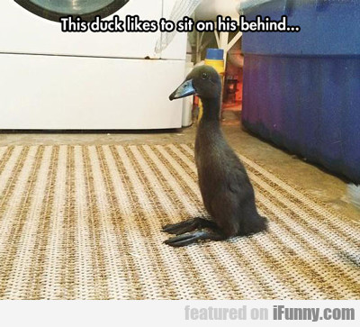 This Duck Likes To Sit On His Behind...