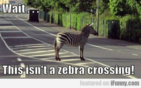 Wait This Isn't A Zebra Crossing...