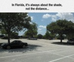 In Florida, It's Always About The Shade...