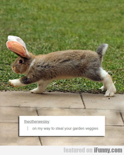 On My Way To Steal Your Garden Veggies