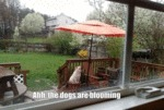 Ahh, The Dogs Are Blooming...