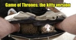 Game Of Thrones - The Kitty Version