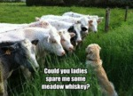Could You Ladies Spare Me Some Meadow Whiskey?