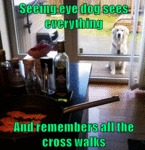 Seeing Eye Dog Sees Everything...