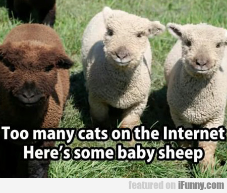 too many cats on the internet...