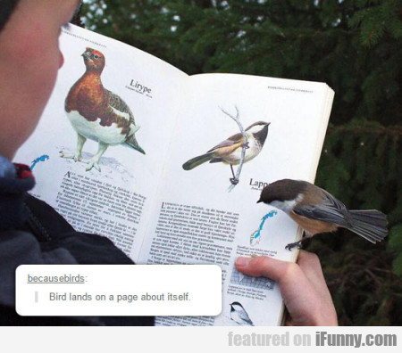 Bird Lands On A Page About Itself