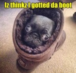 Iz Thinkz I Gotted Da Boot