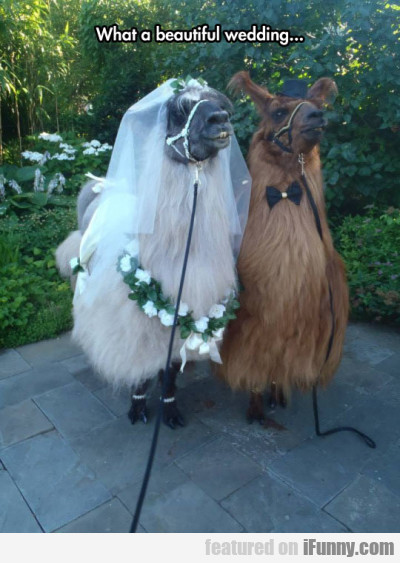 What A Beautiful Wedding...