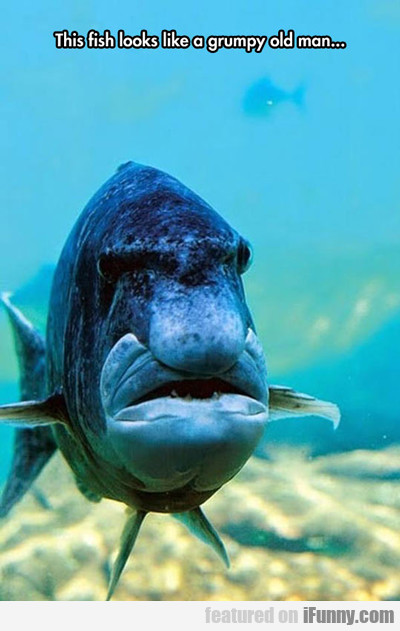 This Fish Looks Like A Grumpy Old Man...