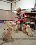 Therapy Dogs In Training Being Read To..