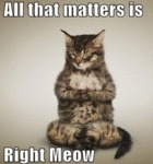 All That Matters Is Right Meow...