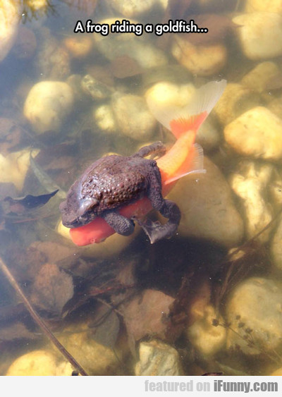 A Frog Riding A Goldfish...