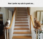 How I Prefer My Cats To Greet Me....