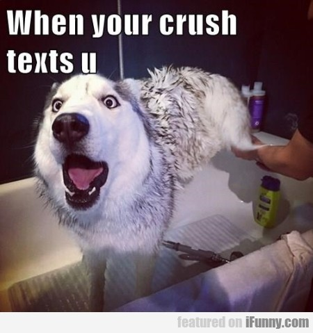 when your crush texts u