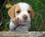 Don't Go Weekend, Don't Go