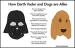 How Darth Vader And Dogs Are Alike